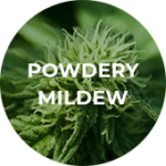 PowderyMildew